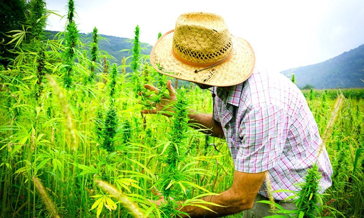 hemp farming offers sustainable solutions