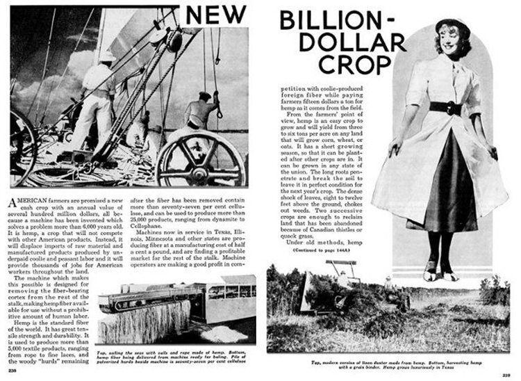 popular mechanics hemp billion dollar crop