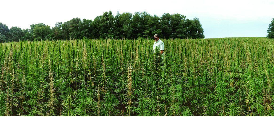 Hemp farming in Kentucky