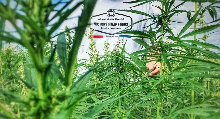 Victory Hemp Food farms hemp in Kentucky