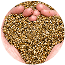 truth-page-hemp-seeds3