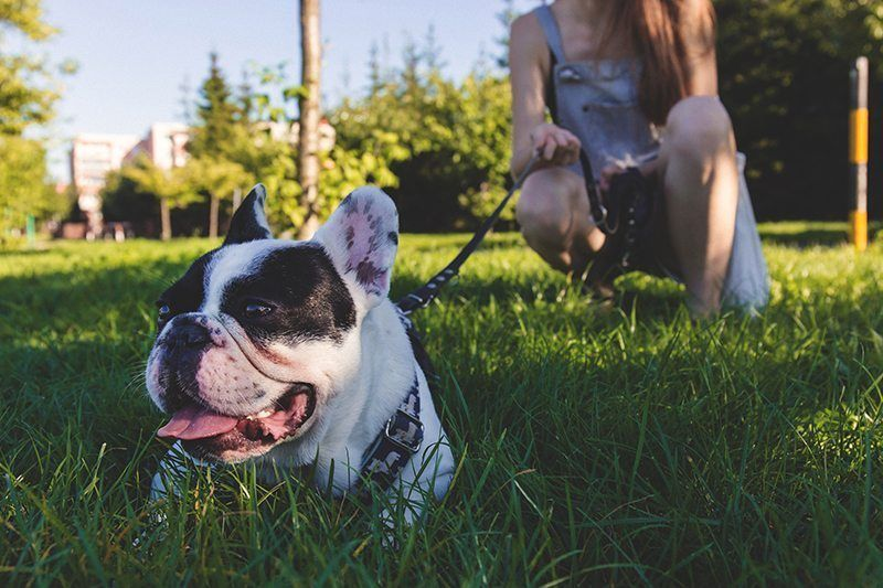 hemp cbd oil can help treat many dog conditions