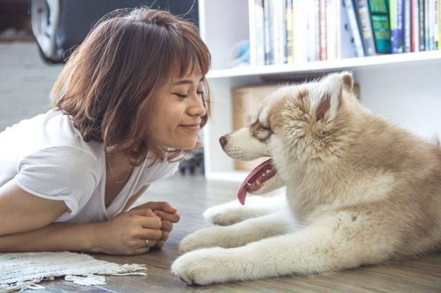 use hemp cbd oil for dogs