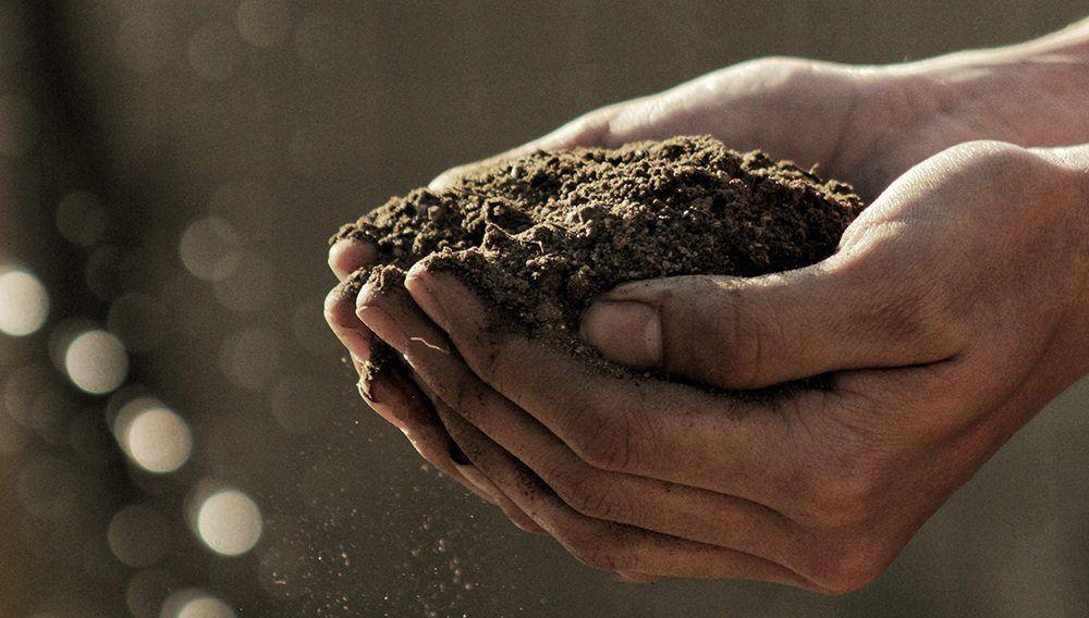hemp soil remediation
