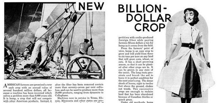 Hemp New Billion Dollar Crop