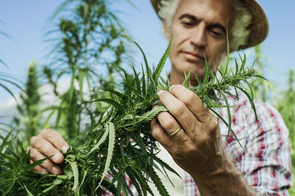 HIA vs. DEA lawsuit could ease worries of hemp farmers