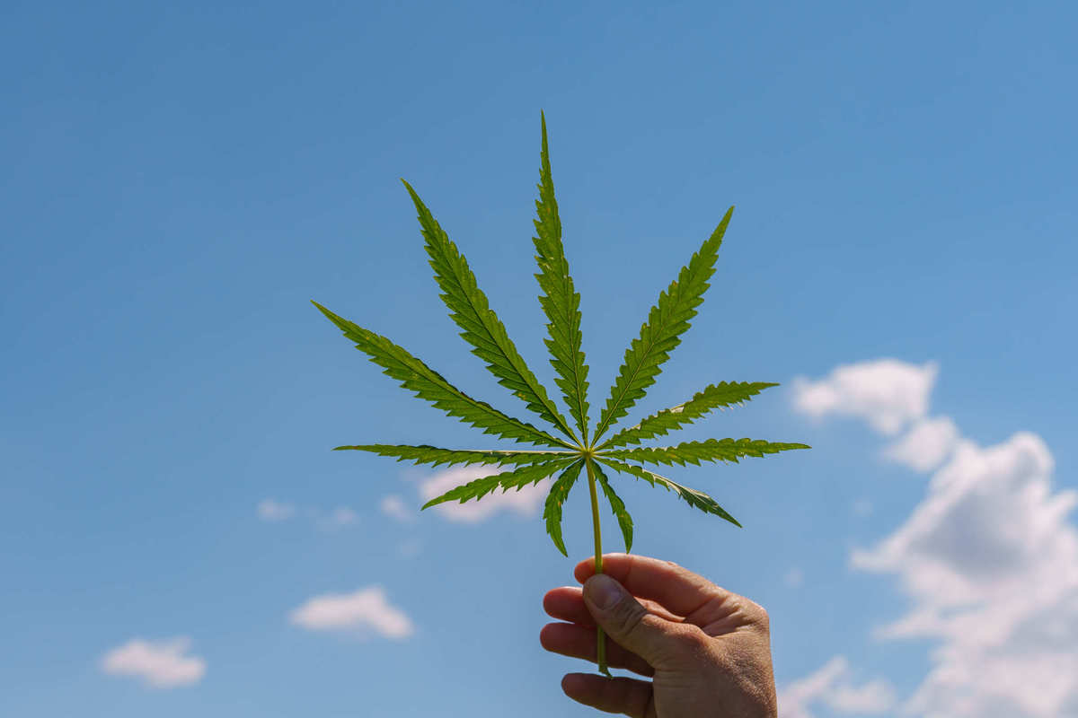 A hand holds a hemp leaf up against the backdrop of a partly cloudy blue sky. Under the 2018 Farm Bill, the return of legal hemp in the U.S. could bring massive benefits to the budding hemp industry, to everyday people, and to the planet.