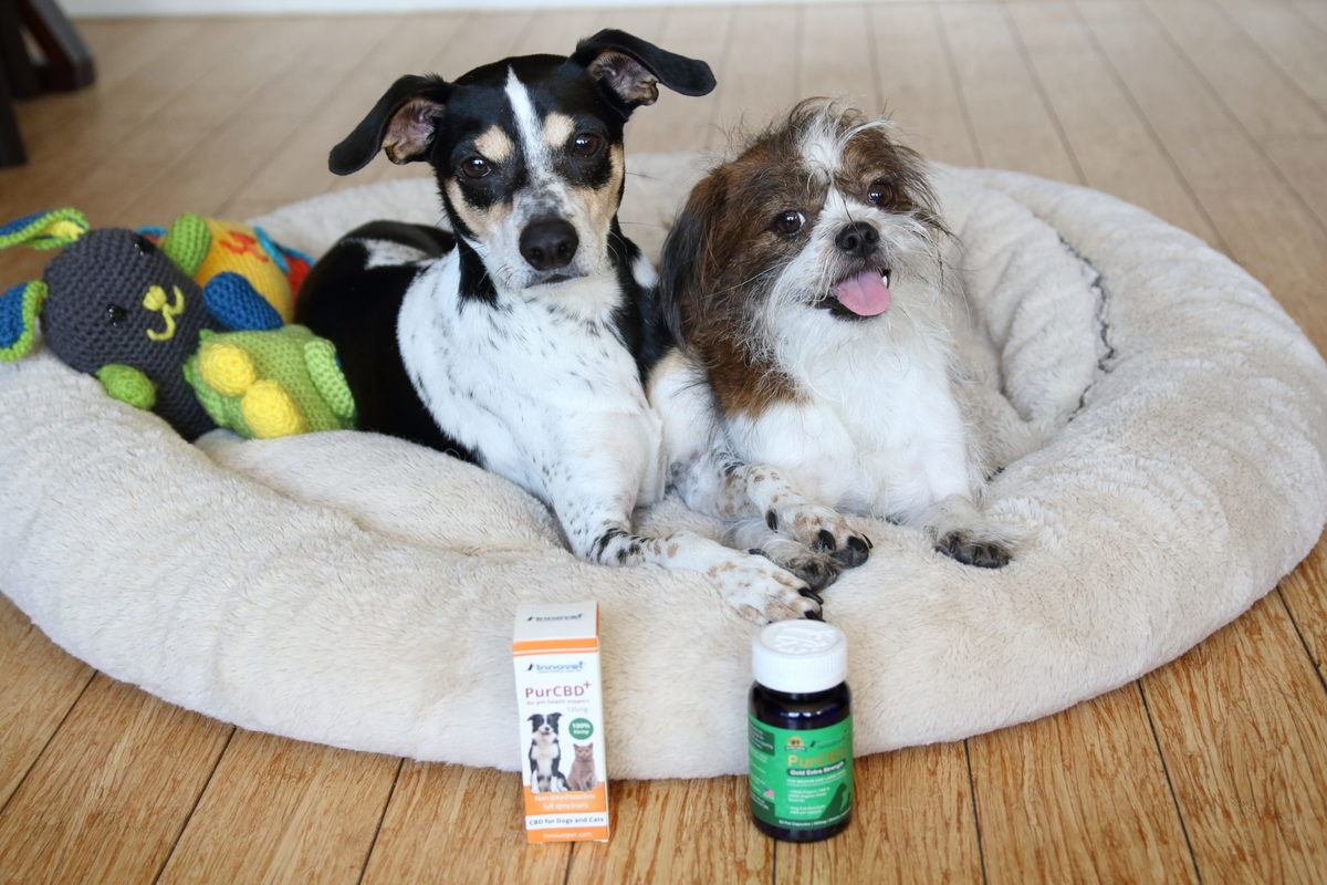 Two small dogs in a dog bed pose with Innovet PurCBD and another Innovet CBD pet product. Our reviewer's pets, both small dogs and a cat, saw significant benefits from taking Innovet PurCBD every day.