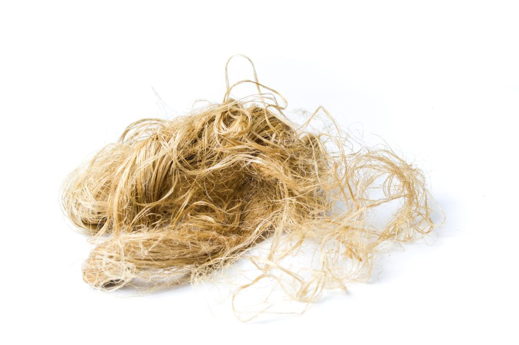 A cluster of stringy hemp fiber separated out from the rest of the plant, photographed against a plain white background. 9Fiber is recycling hemp by separating out the hemp fibers and woody core (hemp hurd). After processing, 9Fiber can reuse these materials in hemp plastic, hempcrete, animal bedding and more.