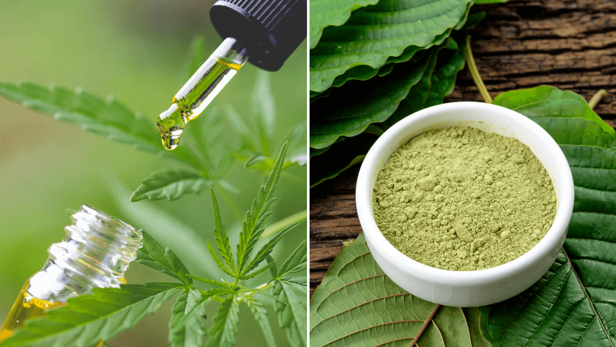 Photo: A composite image comparing CBD vs. Kratom, with a CBD oil bottle and dropper among hemp leaves to the left, and a bowl of powdered kratom and kratom leaves on the right.