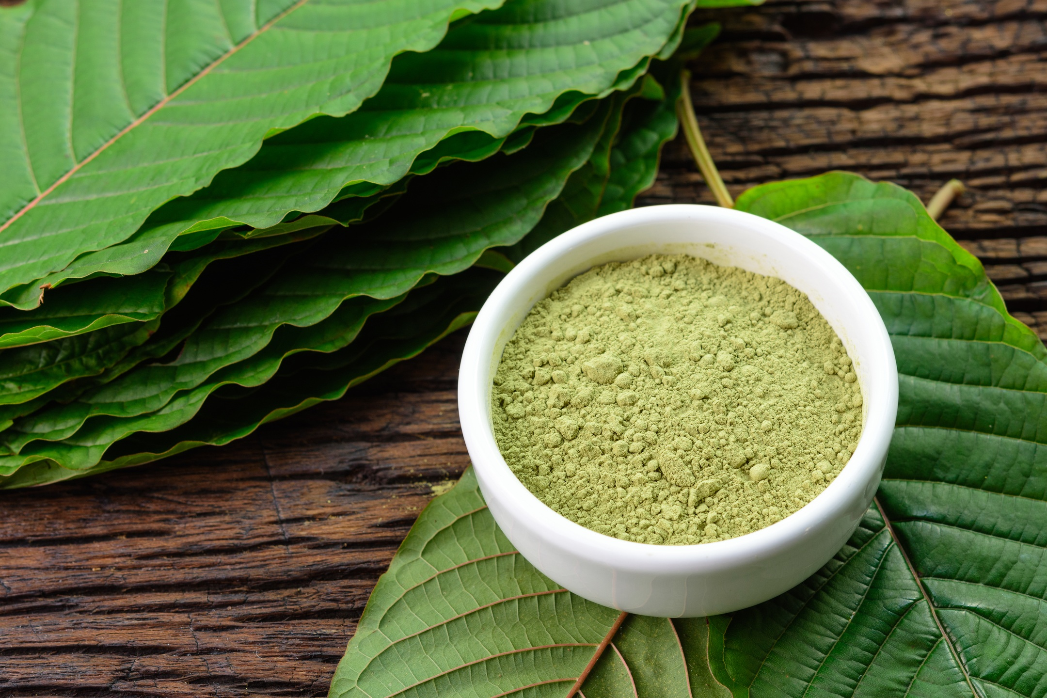 In this article, we compare the relative benefits of CBD vs. kratom. Photo: Powdered kratom in a white bowl sits atop whole mitragyna speciosa leaves.
