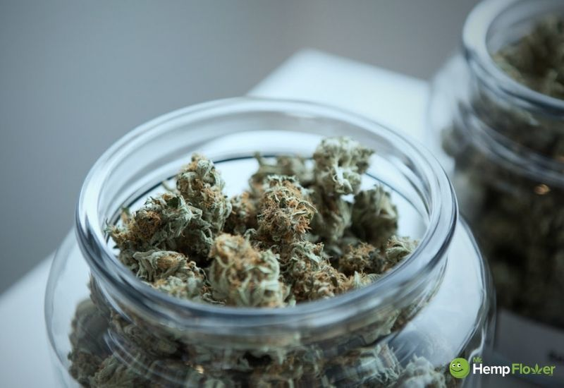 In this article, we explain how to make CBD oil from hemp flower. Photo: A storage jar full to the brim with fluffy hemp flower buds.