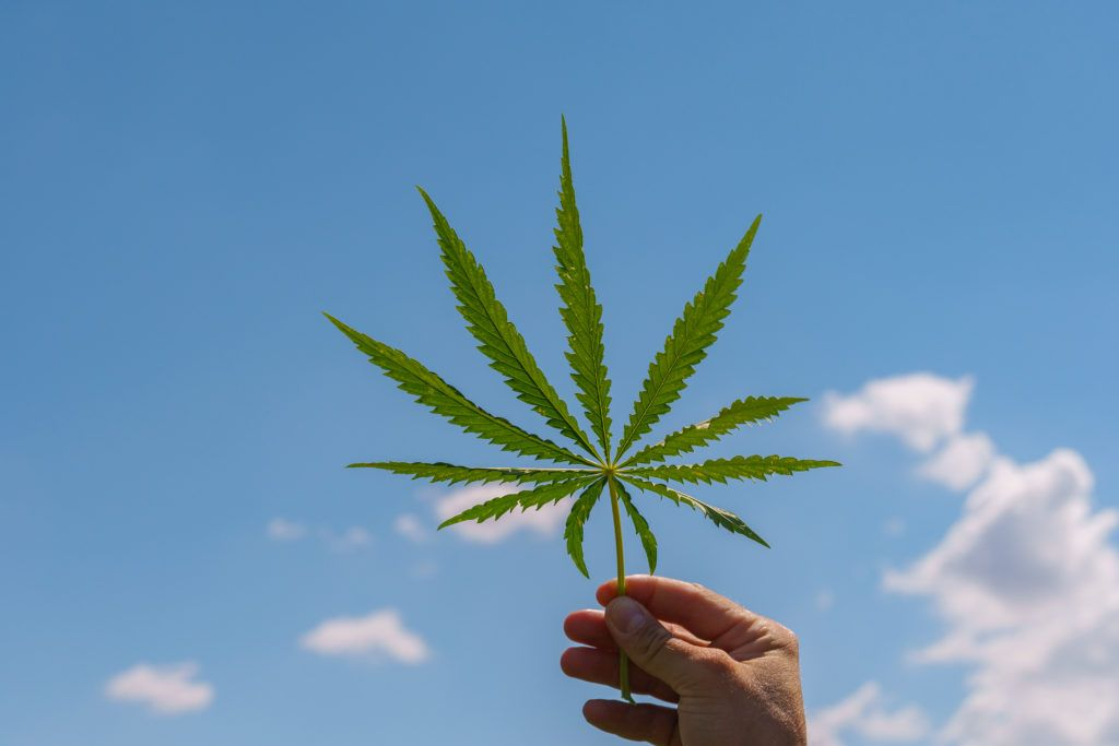 Everyday hemp advocates, including CBD consumers, can play a role in normalizing hemp. Photo: A hand holds a hemp leaf to the sky.
