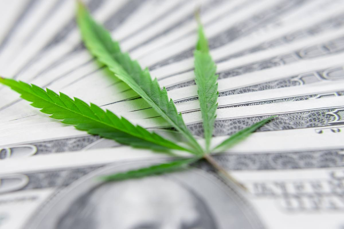 Without the SAFE Banking Act, hemp banking rights remain in a legal gray area. The hemp industry is financially and legally vulnerable. Photo: A hemp lead sitting on a fanned-out stack of $100 bills.