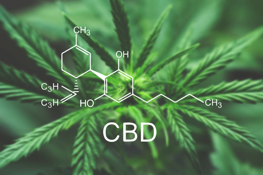 CBD is a naturally occurring compound found in industrial hemp and cannabis which can offer numerous benefits in supplement form. Photo: A digital model of the CBD molecule with a hemp plant in the background.