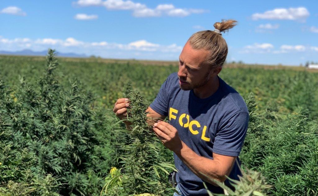 Photo: A FOCL worker studies a hemp plant in a densely packed outdoor hemp field.
