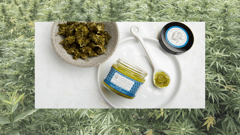 Catskills Comfrey is a small farm in New York, producing topical ointments from hemp and comfrey which they grow. Photo: A collage image showing a bushy hemp field in the background, overlaid with an image of Catskills Comfrey ointment in a spoon, near a bowl of dried Comfrey.