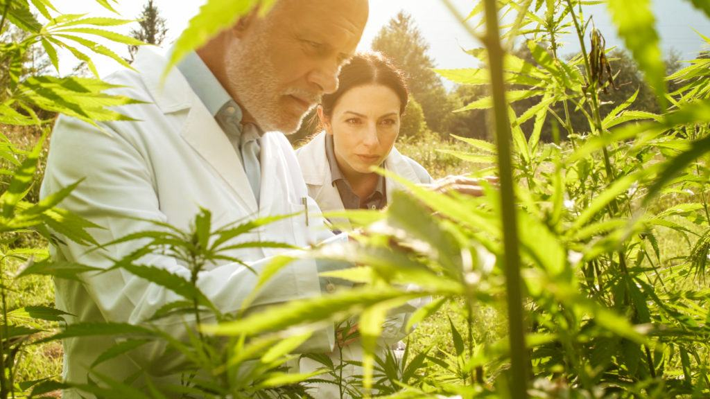 Photo: Two researchers in lab coats study a hemp plant growing outdoors.