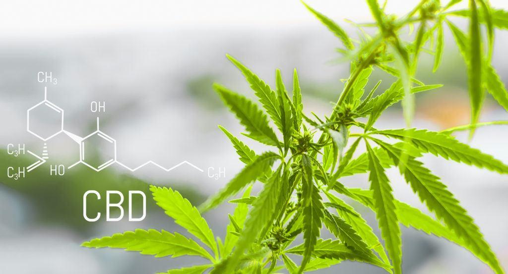 A pair of leafy hemp plants, alongside a drawing of the CBD molecule.