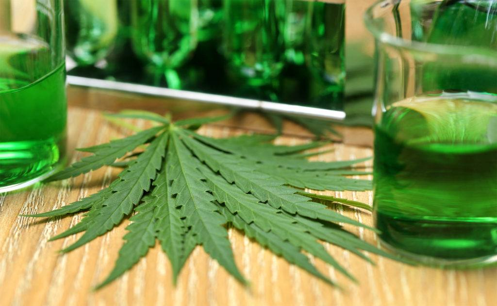 Two beakers of green fluid rest on a table to either side of a small pile of hemp leaves.