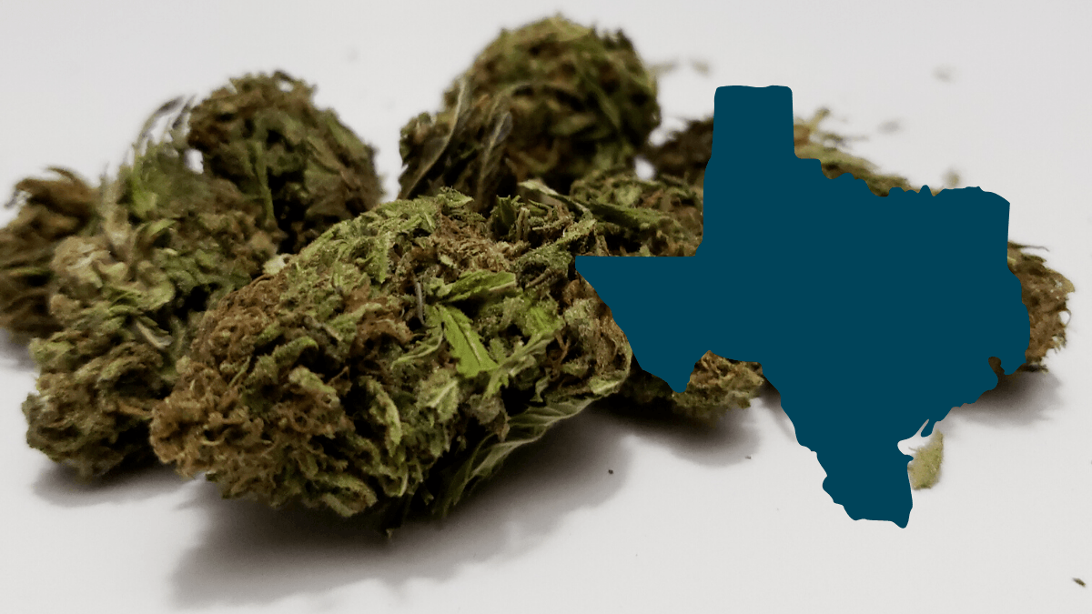 Texas hemp regulations could interere with the industry. Image: A photo of smokable hemp buds with the outline of the state of Texas superimposed.