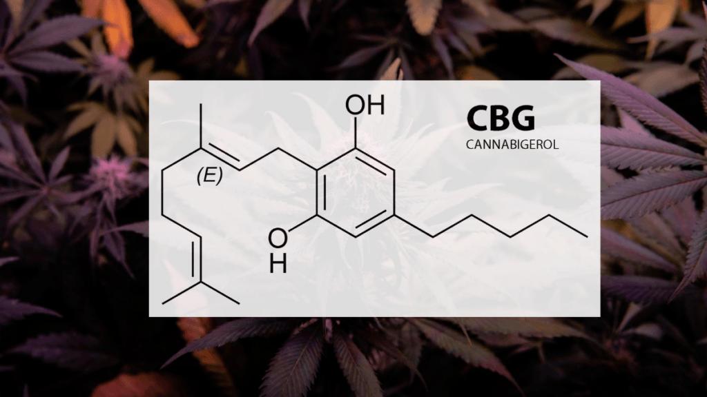 Photo: A diagram of the CBG molecule set against a backdrop of hemp leaves.