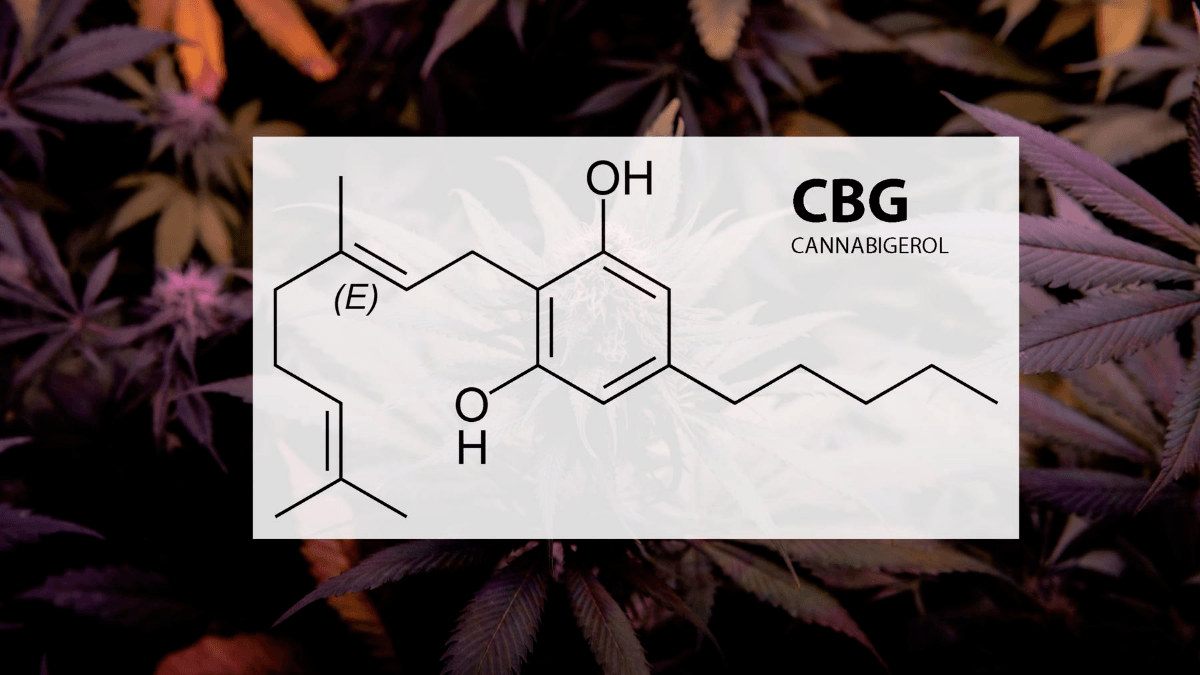 Photo: A diagram of the CBG molecule set against a backdrop of hemp leaves.