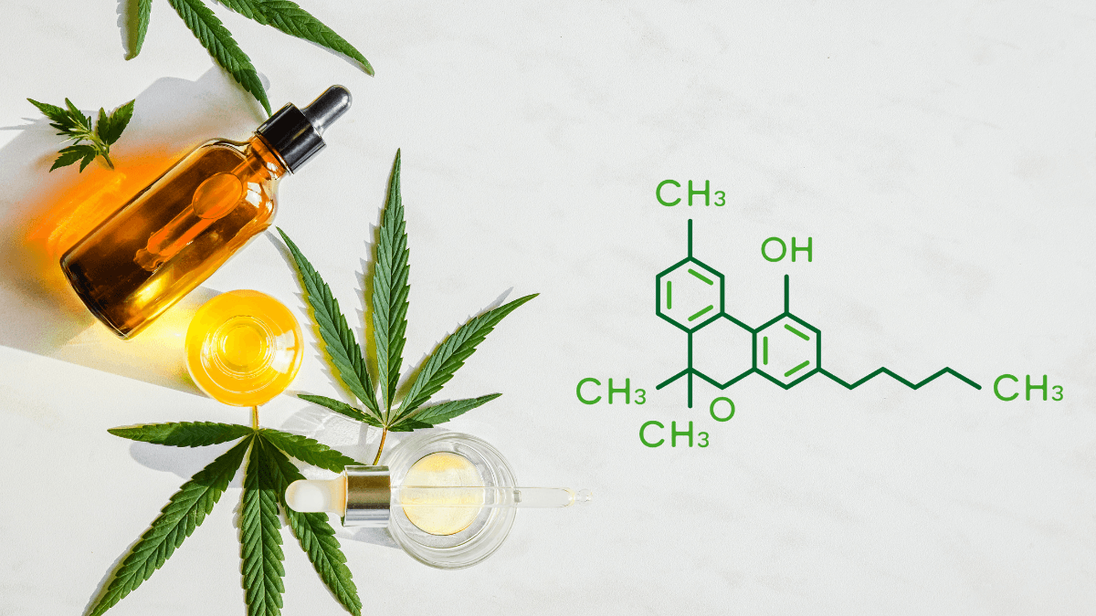 CBN is a cannabinoid found in hemp and cannabis with unique health benefits. An arrangement of generic tincture bottles with hemp leaves, and an image of the CBN molecule.