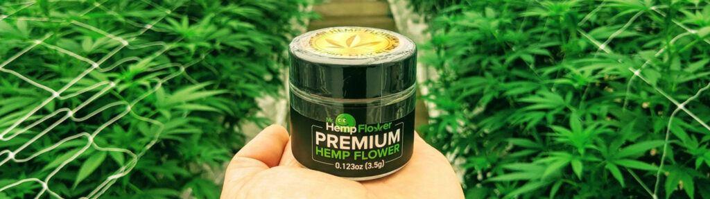 A hand holds a jar of Mr Hemp Flower brand hemp flower while standing in a hemp greenhouse.